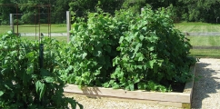 <h5>Garden Soil, Plants, Raised Planters</h5><p>                                                                                                      </p>