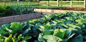 Garden Soil near Charlottesville