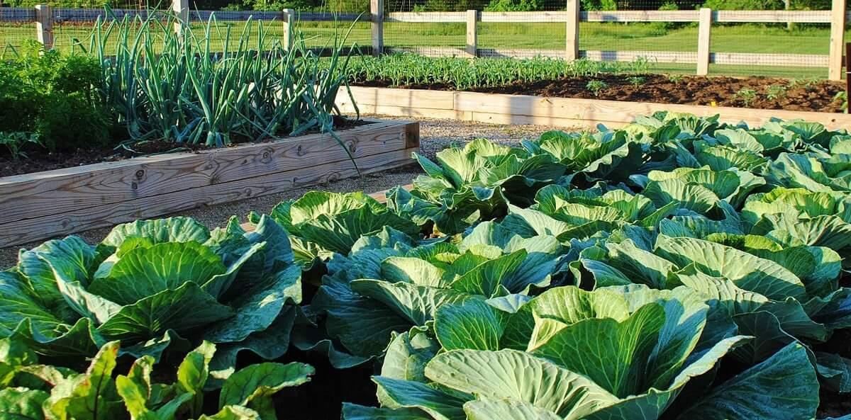 Garden Soil in Charlottesville