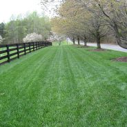Build a Great Sod Base with our Garden Soil