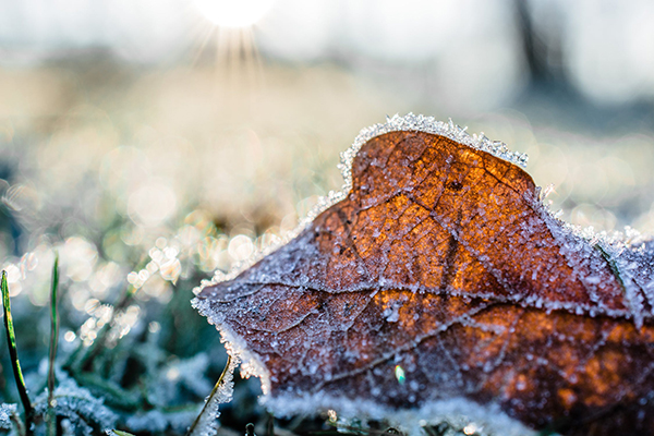 Winter Gardening Tips from Rose Hauling
